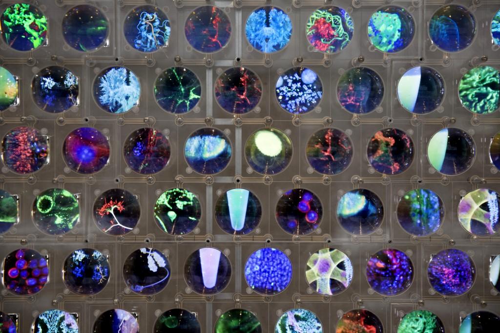 Discovery wall - media installation © Hirsch & mann | Squint/Opera